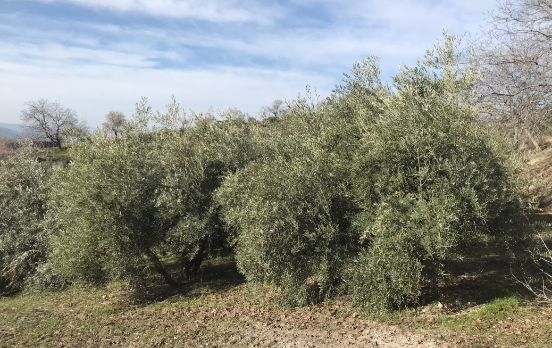 Venta de terreno en Granada: Pago Comina - Beas