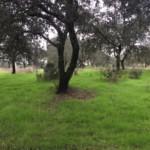 Parcela en Sevilla: Castilblanco (SN54).