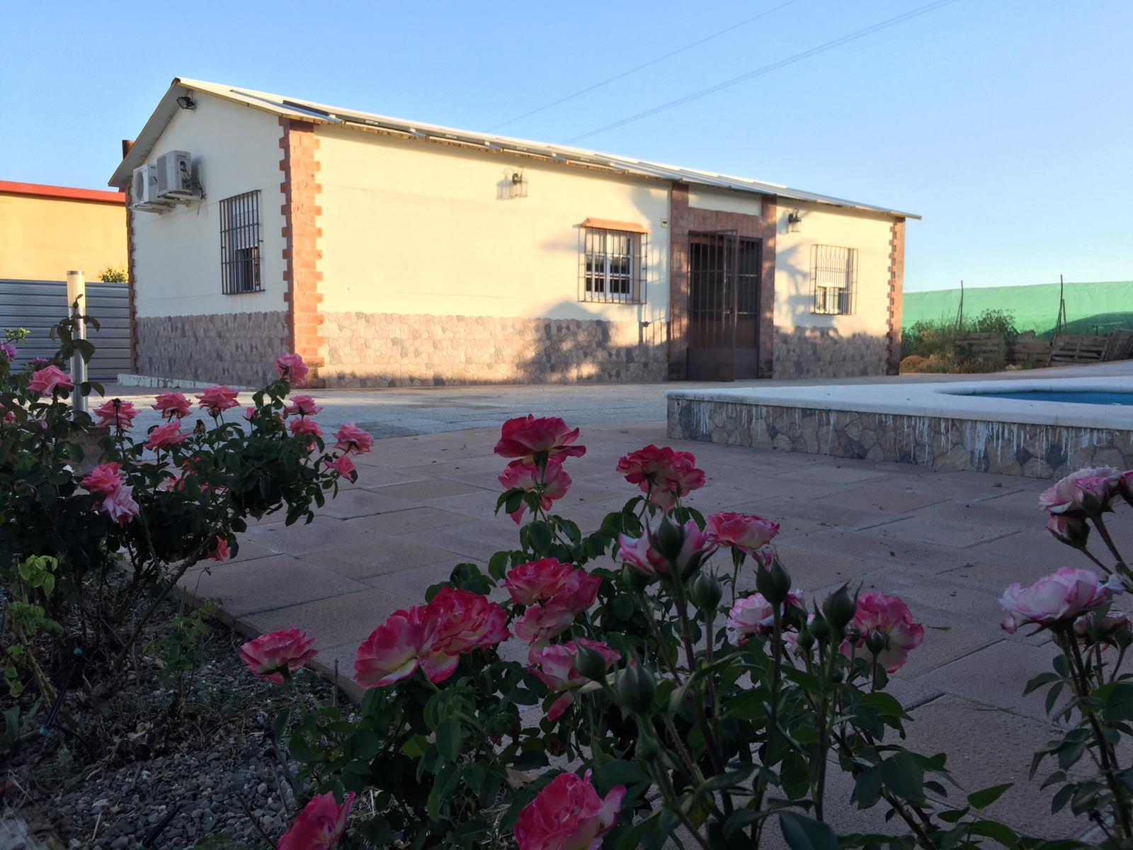 Parcela en San Igancio del Viar - Alcala del Rio (SN890).