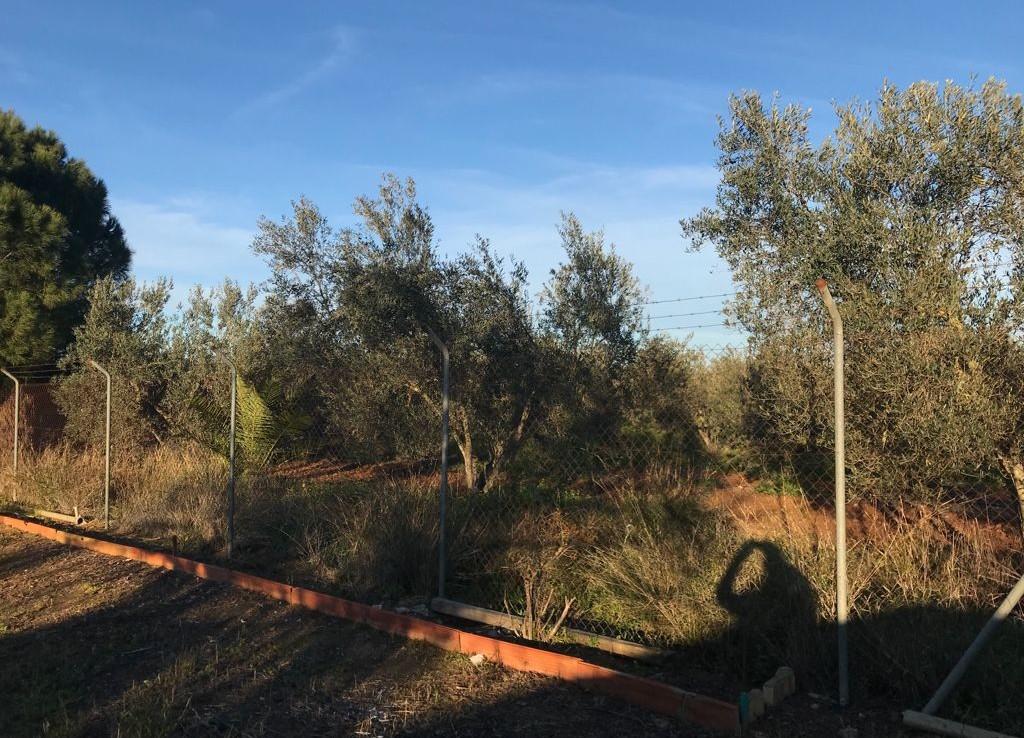 Venta de parcela en Sevilla: Zona Fuente de la Reina – Carmona