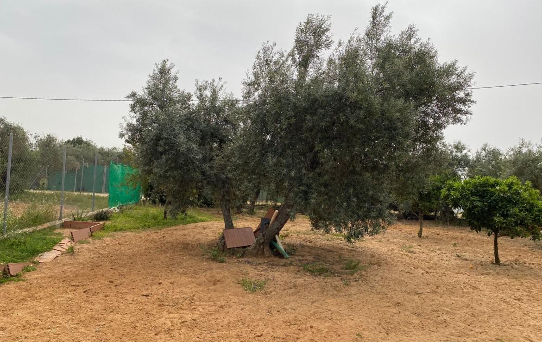 Venta de parcela en Sevilla: Urb. Los Olivares – Arahal