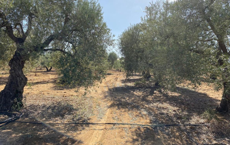 Venta de parcela en Sevilla: La lombarda - Utrera (UR695).