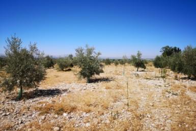 Venta de terreno en Granada: Pinos Puente