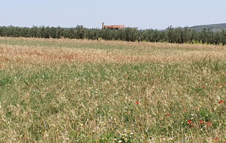 Venta de terreno en Sevilla: Salteras - Sevilla