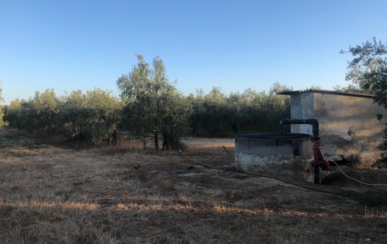 Finca en Pozo nuevo - Sanlucar la Mayor (AL1150).