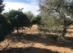Venta de parcela en Sevilla: Las Perdigueras – Utrera