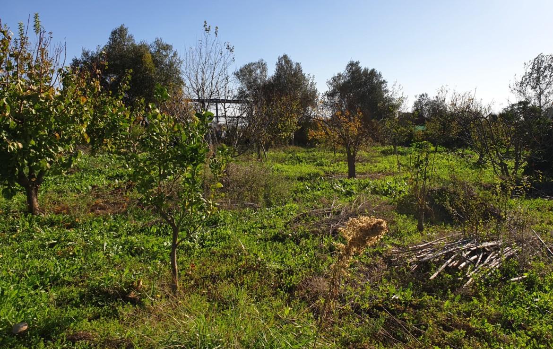 Venta de parcela en Sevilla: Urb. Dehesa de propios- Pilas