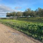 VENTA DE TERRENO EN SEVILLA: URB. EL CARMEN – UTRERA