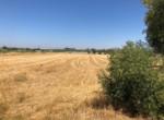 Terreno en venta en Ctra. Arahal-Morón en Arahal