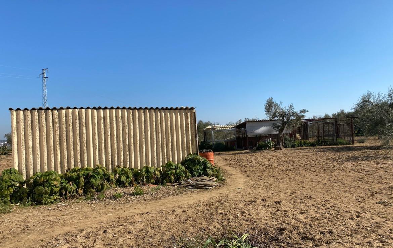 Venta de parcela en Sevilla: Carrera Cerro las Palmas – Utrera