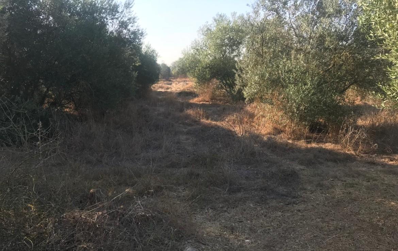 Venta de parcela en Sevilla: Urb. El Saltillo - Utrera